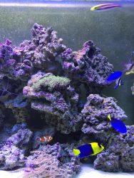 Морской аквариум г. Сходня